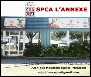 Bâtiment de la SPCA (Société pour la Protection contre la Cruauté envers les Animaux) sur l'avenue Mountain Sights